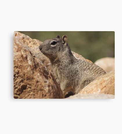 Rock Squirrel  Canvas Print