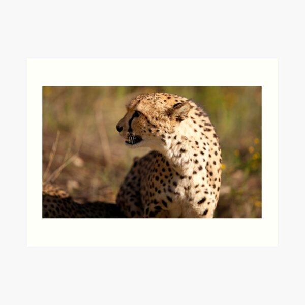 Cheetah close-up Art Print
