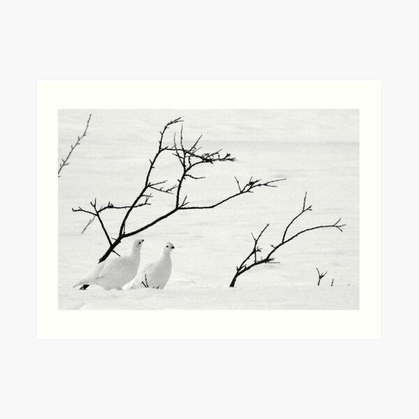 Ptarmigan Winter Art Print