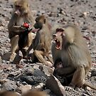Baboon mother & baby by hedgie6
