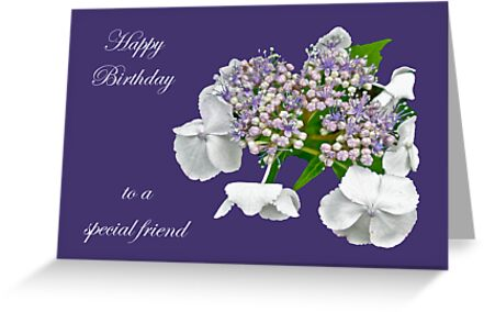Special Friend Birthday Card Blue Lace Cap Hydrangea Greeting