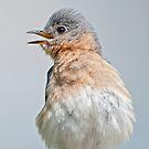 Bluebird HoeDown by Bonnie T.  Barry