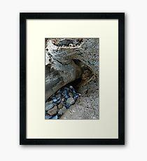 Natural History Framed Print