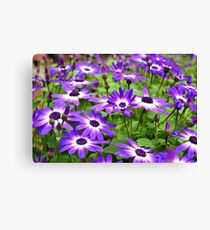 Bursts of Purple and White Canvas Print
