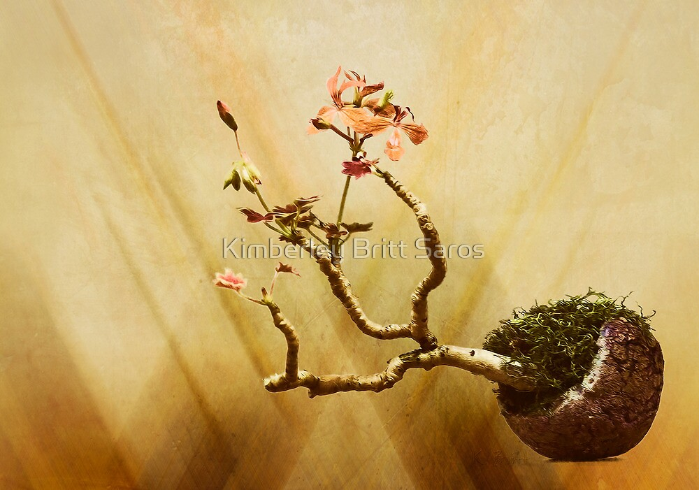 Bonsai by KBritt