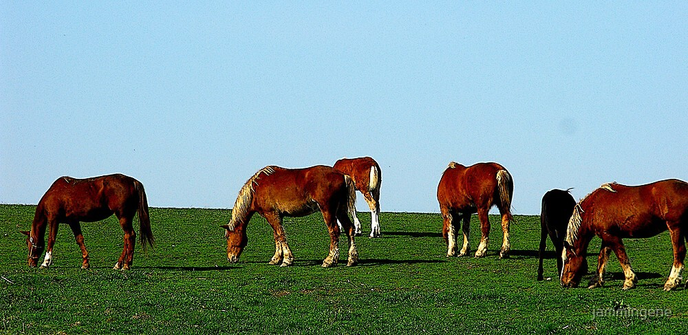 Spring is here..plenty of grass to munch on now by jammingene