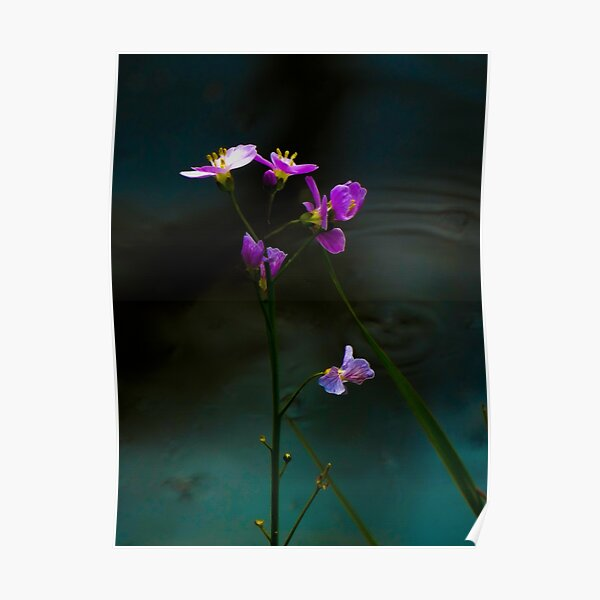 purple flowers by Alet Poster