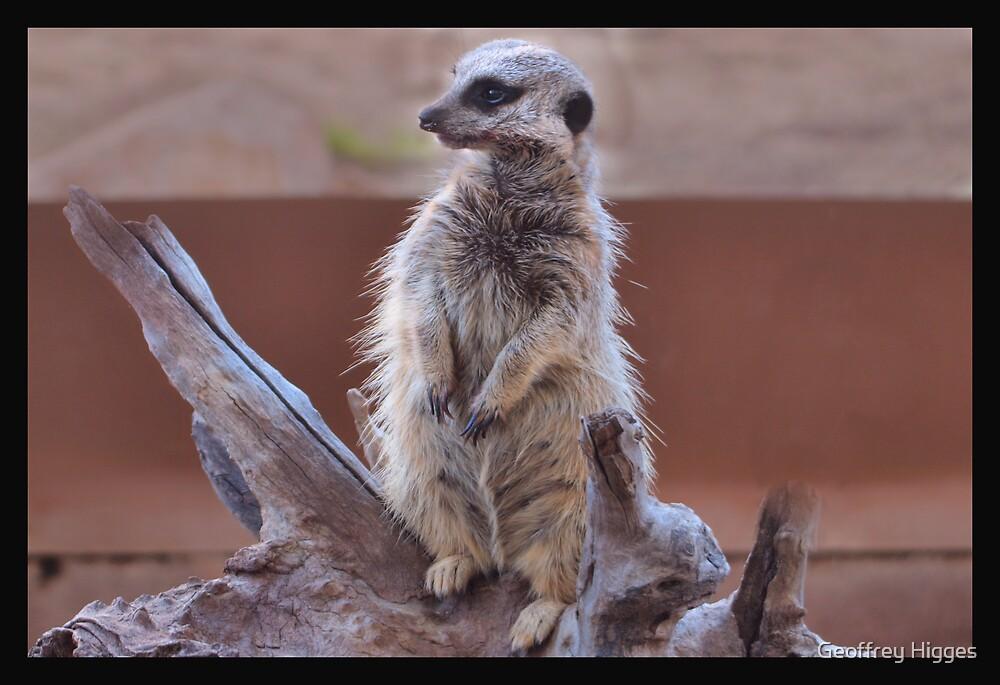 Meerkat by Geoffrey Higges