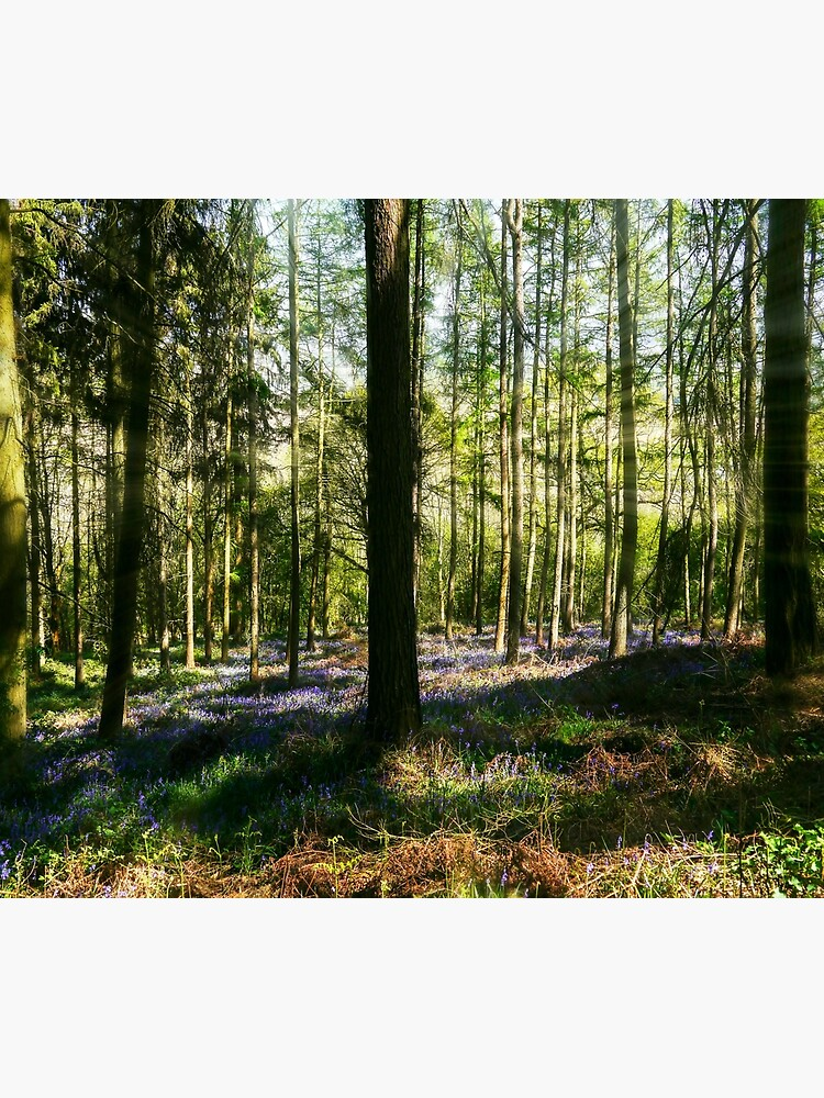 Bluebell Woods by ScenicViewPics