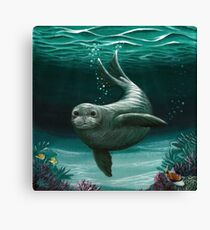 Hawaiian Monk Seal ~ acrylic painting by Amber Marine Canvas Print