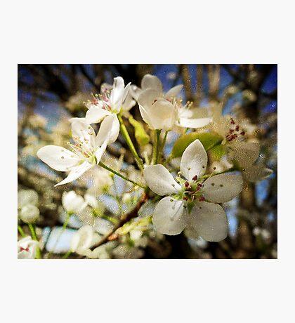 Bloomin' Blossoms Fotodruck