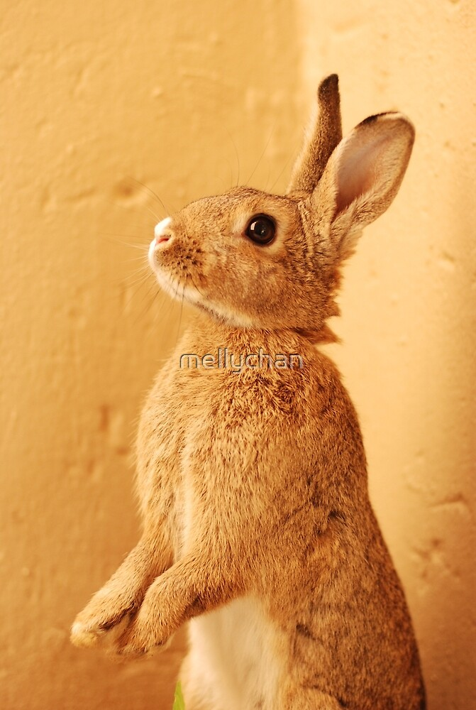 a bunny named milo by mellychan