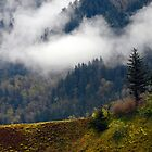 The Columbia River Gorge by Jennifer Hulbert-Hortman