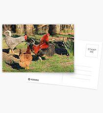 Do'en The Funky Chicken Postcards