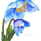 Twin Blue Poppies by Pat Yager