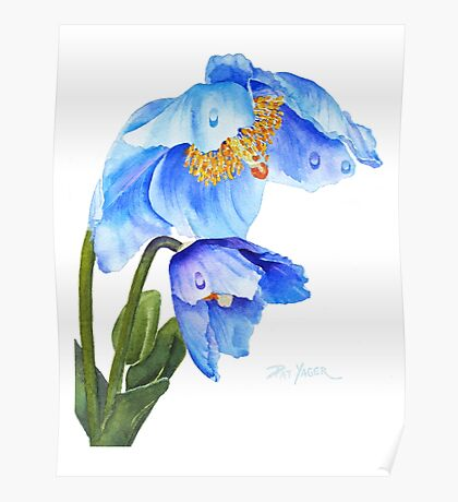 Twin Blue Poppies Poster