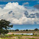 Kalahari after the rain by Rudi Venter