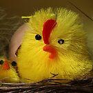 Easter chicks by PhotoTamara