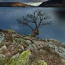 Ullswater Tree by Brian Kerr