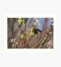 Now this is a sign of spring!!!! Art Print