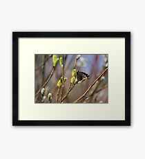 Now this is a sign of spring!!!! Framed Print