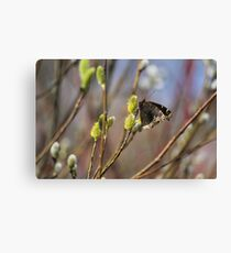 Now this is a sign of spring!!!! Canvas Print