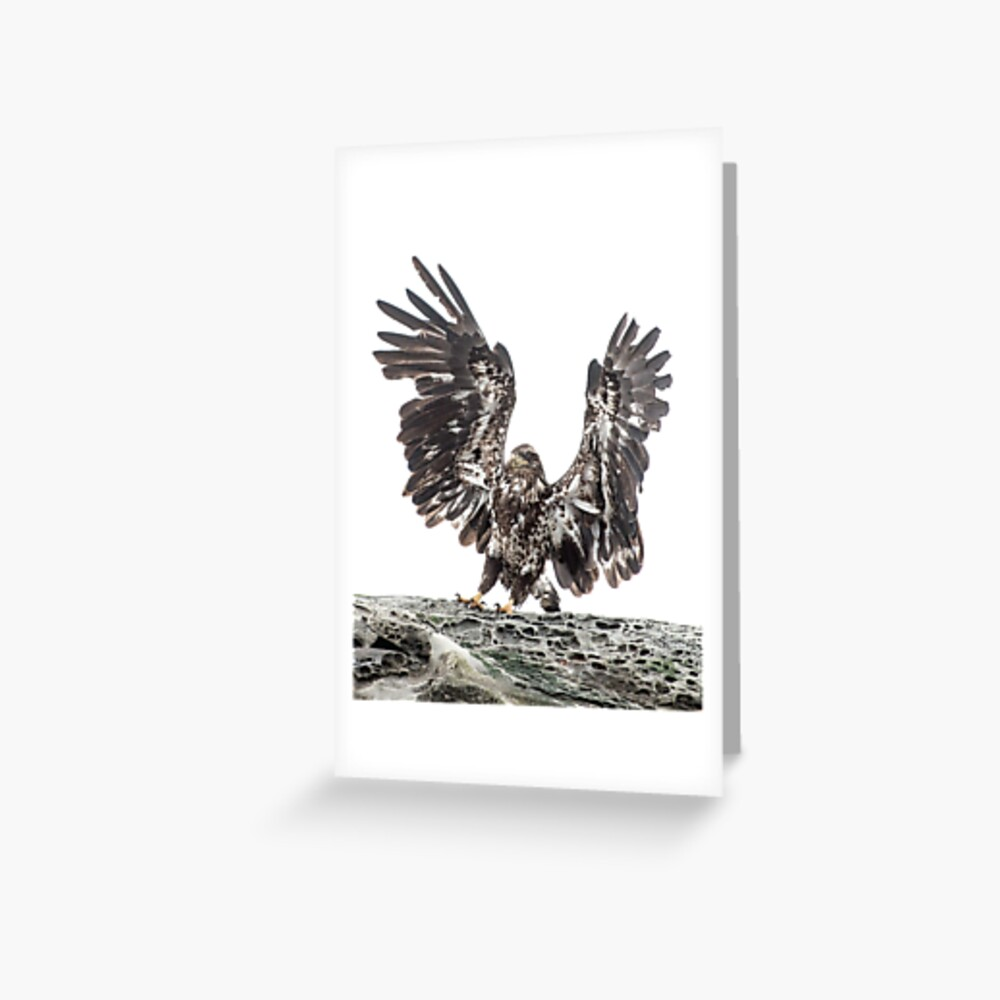 Immature Eagle, Belle Chain Islets Greeting Card