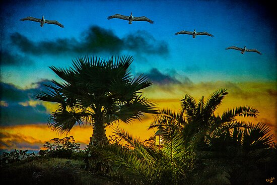 Tropical Sunset With Pelicans by Chris Lord
