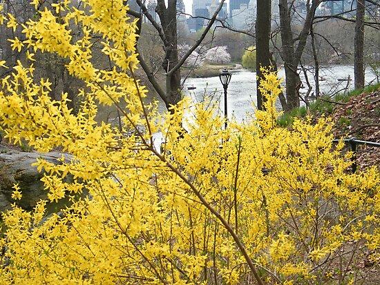 Central Park, Spring Colors, New York by lenspiro