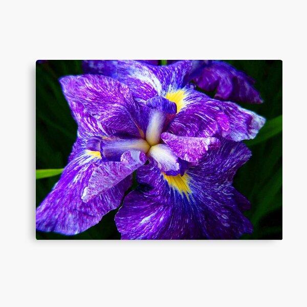 Iris © Canvas Print