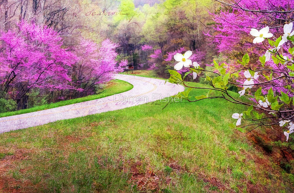 Blue Ridge Kind of Spring by Darren Fisher