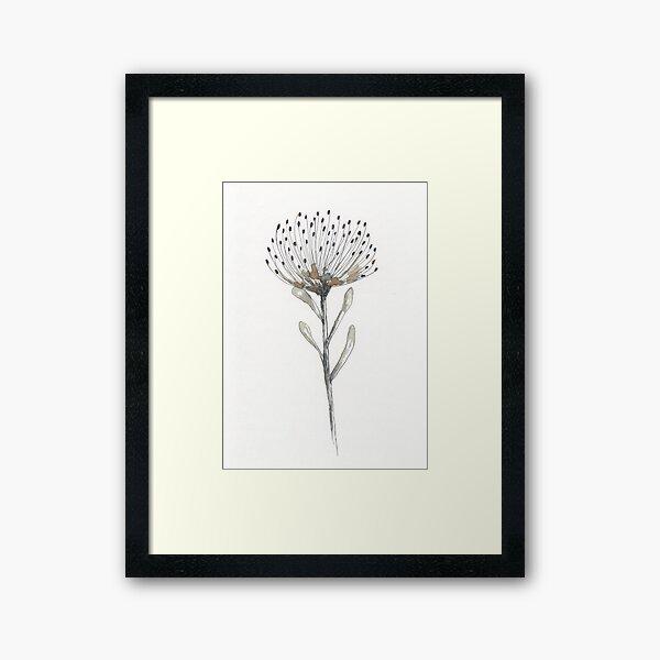 Pin cushion protea Framed Art Print