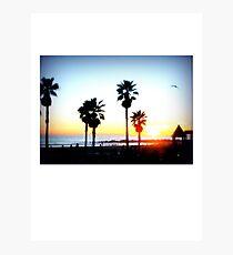 Palms Venice Beach Photographic Print