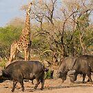 Vision of Africa by Erik Schlogl