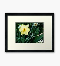 Yellow Daffodil Framed Print