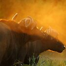 Afterglow by Explorations Africa Dan MacKenzie
