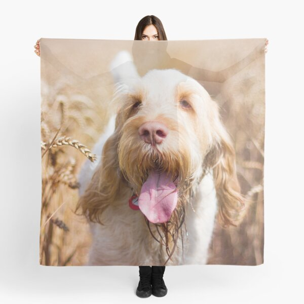 Hot dog summer Spinone Scarf
