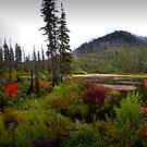 Oregon Cascades ~ Cache Mountain ~ by Charles & Patricia   Harkins ~ Picture Oregon
