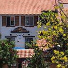 House with a spring tree - Casa con un Arbol de Primavera by PtoVallartaMex