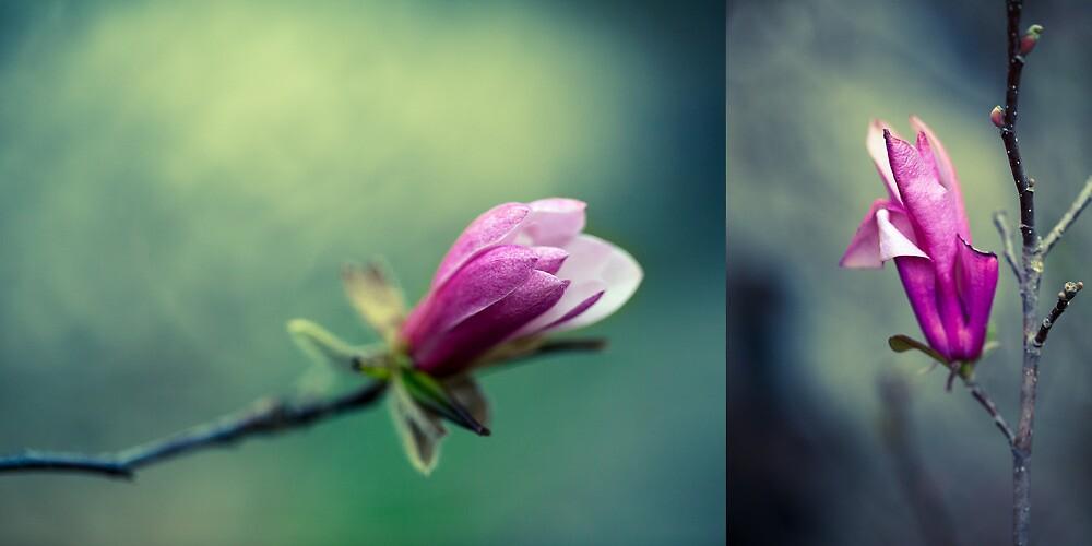 Tulip Tree Diptych by alan shapiro