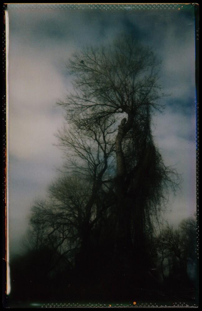 treebeard by Jill Auville