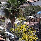 Palm and Spring Tree - Palma y Arbol de Primavera by PtoVallartaMex