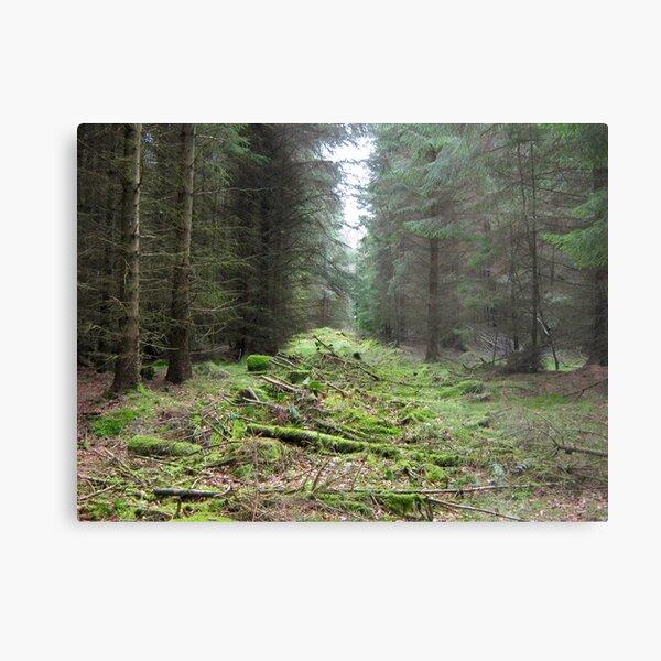 Kielder Forest  Metal Print