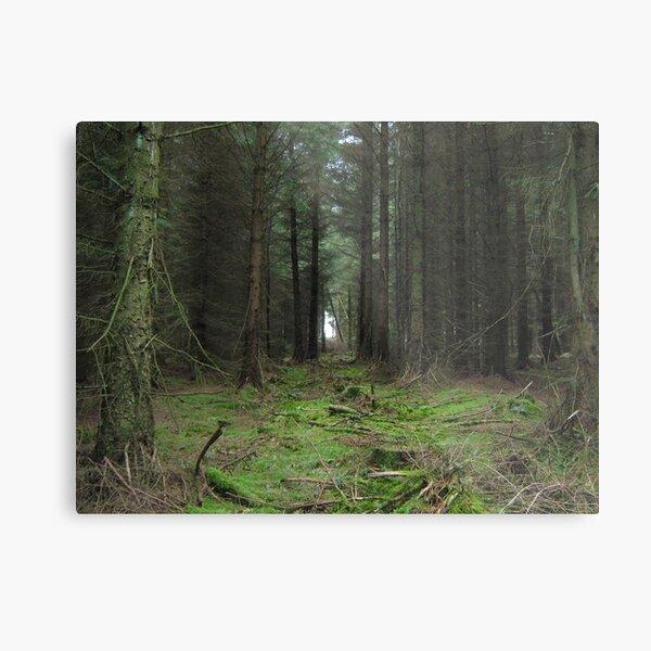 My Kielder Forest photo Metal Print