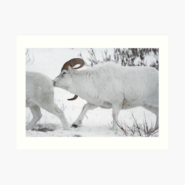 Ewe Aint Seen Nothing Yet Art Print