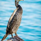 Standing proud by Ralph Goldsmith