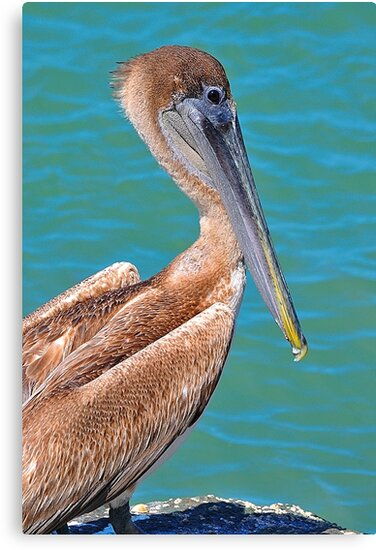 Pelican on the coast by joevoz