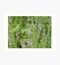 Up Close with Texas Vervain Art Print