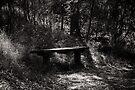 Bench by Christine Wilson