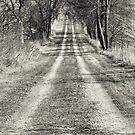 The Road Less Traveled  by Marcia Rubin